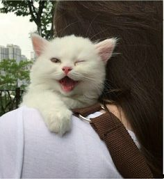 Very interesting post: TOP 48 Funny Cats Pictures.сom lot of interesting things on Funny Animals, Funny Cat. I Love Cats, Crazy Cats, Cool Cats, Baby Animals, Funny Animals, Cute Animals, Cute Kittens, Cats And Kittens, Funny Cat Pictures
