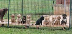 """LICHTBLICK FÜR DIE TIERHILFE ISTRIEN: durch das couragierte Eingreifen der kroatischen Hilfsaktion """"Živi zid"""" https://www.facebook.com/zivizidd konnte heute die Zwangsräumung der Tierhilfe Istrien in Novigrad verhindert werden. Die Polizei ist bereits abgezogen. Weitere Verhandlungen um das Tierschutz-Projekt sind auf Oktober vertagt. Die Tierhilfe dankt allen Unterstützern für die bislang eingegangenen Spenden! Spendenkonto: http://www.istrien-pur.com/tierhilfe-istrien-kurz-vor-dem-aus/"""