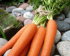 A Veggie Venture: How to Keep Fresh Vegetables Fresh Longer