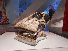 Nigersaurus - the ROM - Kendra Spence