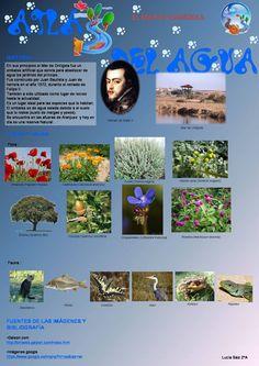 Fauna y Flora del Mar de Ontígola Autora: Lucía Saiz