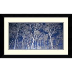 Found it at AllModern - 'Birch Trees' by Micha Pawlitzki Framed Photographic Print