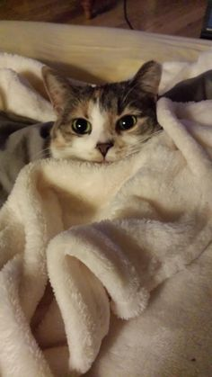 Snuggled in for movie night