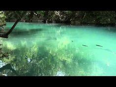 Espírito da Natureza, Sons da natureza, Sons de pássaros, Relaxamento, Meditação, - YouTube
