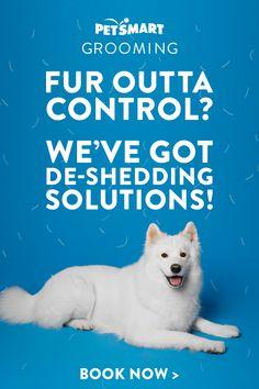 Cute Baby Animals, Funny Animals, Bacon, Tiny Puppies, Cat Dog, Dog Care Tips, Pet Health, Health Tips, Health Care