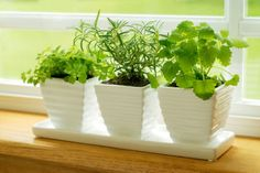 Maintaining a herb garden indoors is an enjoyable and relaxing hobby for many people. You can grow an indoor herb garden with basic gardening skills and supplies. For more information on how to start an indoor herb garden, read on. Herb Garden In Kitchen, Kitchen Herbs, Herbs Garden, Kitchen Decor, Kitchen Sink, Kitchen White, Garden Trellis, Garden Seeds, Green Garden