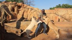 The Lion Park in the Gauteng Province, South Africa. You will find rare white lions, antelopes, wild doges, hyenas, jackals and cheetahs.