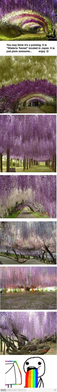 Awesome hanging flowers.