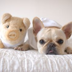 ♥FWF♥ 140  FRENCHIE & PLUSH FRENCHIE