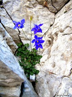 Natura : La storia delle nostre montagne: le Alpi Apuane ...