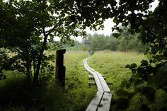 Näissä paikoissa kevät kannattaa kohdata Porissa - Satakunnan Kansa --- Enäjärven luontopolku ohittaa Mäntyluodontien läheisyydessä lintutornin, jonka tienoilla avautuu kaunis kurjenjalka-saraluhta.