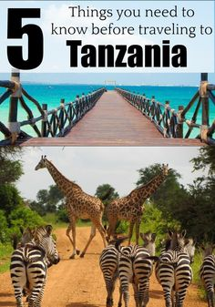 Planning or dreaming of traveling to Tanzania? Then read these 5 important tips to travel to Tanzania and enjoy this stunning country in Africa. Discover when to travel to Tanzania, where to go, how t Tasmania Australia, Australia Travel, Perth, Brisbane, Africa Destinations, Travel Destinations, Travel Photographie, Art Simple, Viewing Wildlife