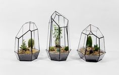 Geometric Glass Terrariums and Lamps by Score + Solder. Canadian design studio Score+Solder, founded by Matthew Cleland, proposes very beautiful terrariums and lamps in glass playing with geometric forms. Cacti And Succulents, Potted Plants, Indoor Plants, Plant Pots, Decoration Design, Deco Design, Geometric Lamp, Geometric Flower, Geometric Form