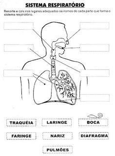 Pedagógiccos: Atividades sobre o Corpo Humano - parte 1 - #ATIVIDADES #Corpo #Humano #PARTE #Pedagógiccos #sobre Science Worksheets, Science Activities, Human Body Activities, 6th Grade Science, Human Anatomy And Physiology, Nursing Notes, Respiratory System, Body Systems, Teaching Spanish