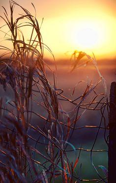 Rural sunrise...