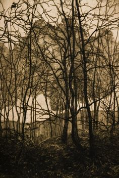Vojtěch Preissig (Czech, 1873-1944). Forest. ca 1900. Etching on paper.
