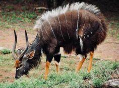 Interesting Animals, Unusual Animals, Rare Animals, Animals Images, Animals And Pets, Animal Pictures, Strange Animals, Funny Pictures Images, Wild Animals
