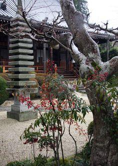 ✿ ❤ Japan...御所市 九品寺(くほんじ) 南天 (Gose Kuhonji (Kuhonji) southern) The ancient capital of Nara, Japan