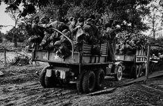 Cherbourg. June 26th-28th, 1944. German soldiers captured by American troops. Capa