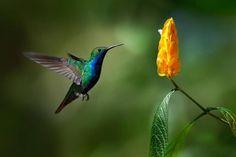 http://i1.wp.com/invorma.com/wp-content/uploads/2015/06/Hummingbird-02.jpg