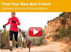 RAD Adoption Program | Connecting active dogs with active people | Ruffwear