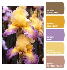 Paint colors from Co