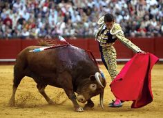 In bullfighting, the principal performer who works the capes and usually dispatches the bull with a sword thrust between the shoulder blades. Though most bullfighters have been...