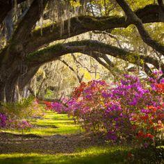 Charleston SC Magnolia Plantation Gardens