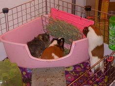 The girls hay box- thats a corner cat litter box as the bottom