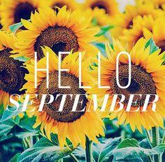Hello August Sunflower Bright Happy Background August 2016