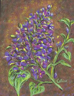 Lilac, this one has sold - other paintings by Celise follow or msg me on facebook for special orders or available paintings and prints for sale