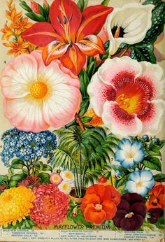 John Lewis Childs Seed Company Catalogue - rare flowers, vegetables & fruits - 1896