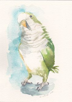 Original Watercolor Green Quaker Parrot Parakeet https://www.facebook.com/artwork.friner
