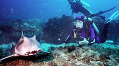 Underwater National Parks: A Compelling Case