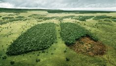 """Deforestation """"The earth's endowments of natural resources are being depleted…"""