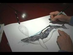How to draw a Whale Jan Brett drawing lessons