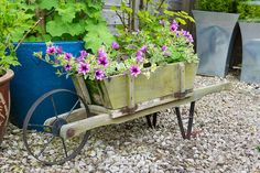 You kind of want to throw an old wheelbarrow away, but then you kind of don't. Thinking about that, we decided to highlight 30 ideas for wheelbarrow garden projects. Indoor Garden, Outdoor Gardens, Potted Garden, Garden Plants, House Plants, Wheelbarrow Planter, Garden Basket, Garden Cart, Garden Bed