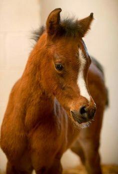 Sweet foal