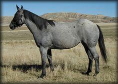 http://www.powderriverhorses.com/images/blue%20apache%202007%2002.jpg