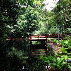 Jardim Botânico do Recife em Recife, PE Paraiba, Rio Grande, Four Square, Places, Garden, Pictures, Travel, Bahia, Images Of Landscapes