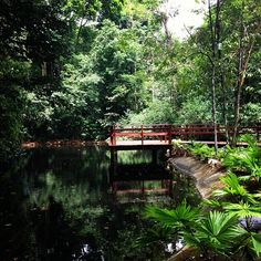 Jardim Botânico do Recife em Recife, PE