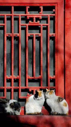 Traditional Chinese timber lattice window