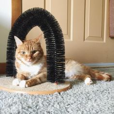 The Purrfect Arch is a nap spot, a self-groomer, and a massager.