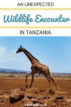 An Unexpected Wildlife Encounter in Tanzania
