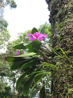 I love how Orchids grow on trees.