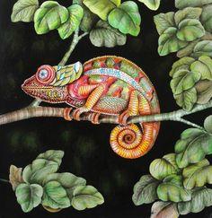 Pattern Flower Coloring Books Adult Jungle Johanna Basford Animal Kingdom Chameleons Art Journals Tropical