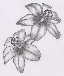 Resultado de imagen de dibujos de orquideas a lapiz: