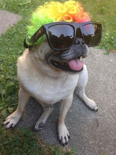 """""""Someday everyone will worship our fabulousness."""" 
