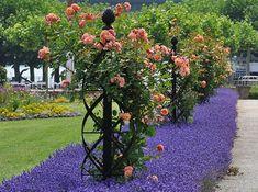 Climbing Roses Trellis Decor