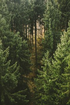 forest | nature photography #trees